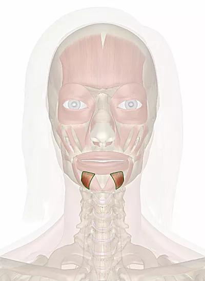 muscolo depressore del labbro inferiore