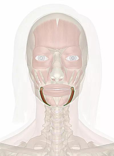 muscolo depressore dell'angolo della bocca