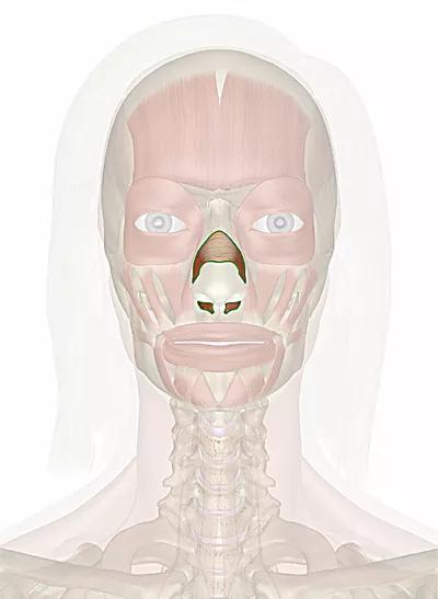 muscolo nasale