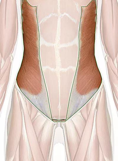 muscoli obliqui esterni