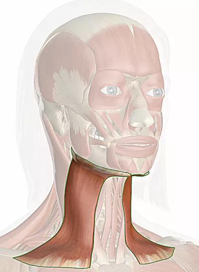 muscolo platisma