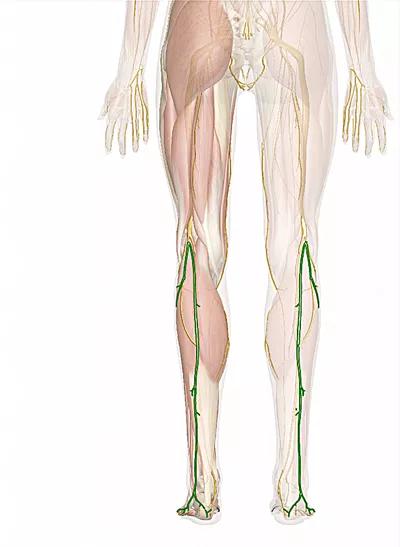 nervo surale