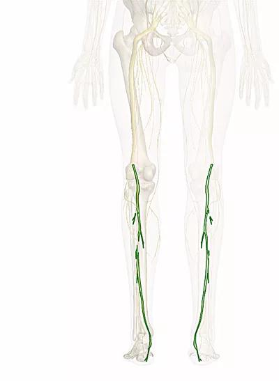 nervo tibiale