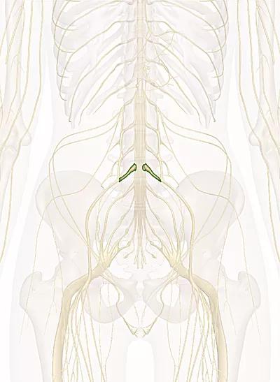 primo nervo sacrale