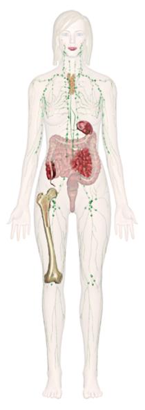 quali due sistemi del corpo rimuovono i rifiuti dal corpo sale inglese cos è