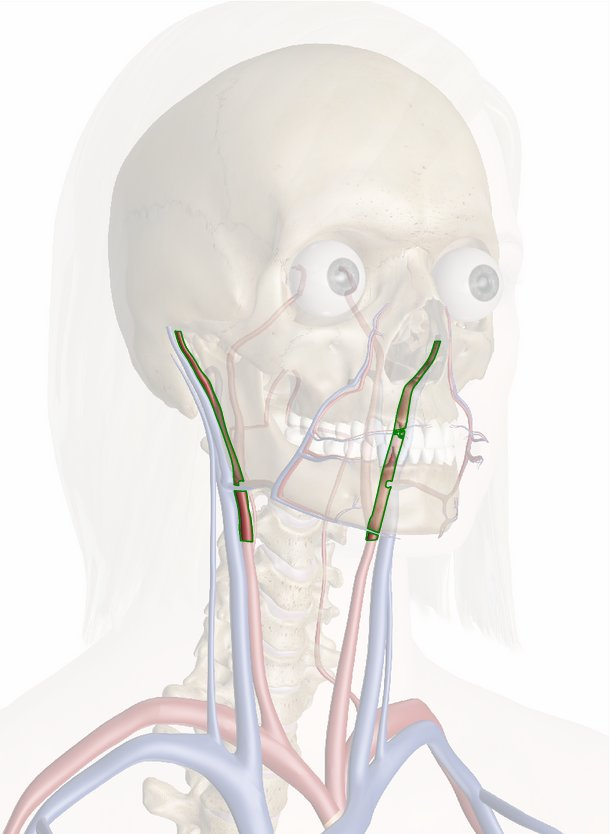 arteria facciale