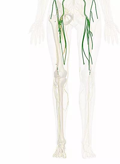 nervo femorale