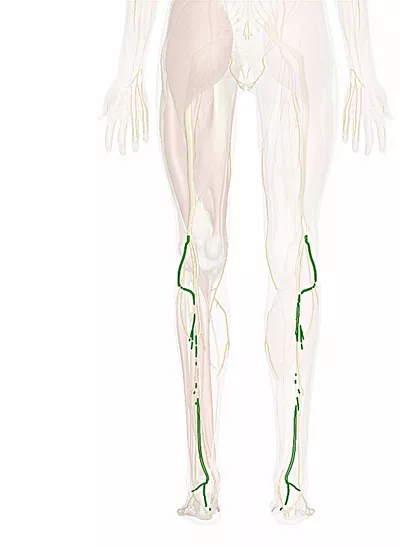 nervo peroneo comune