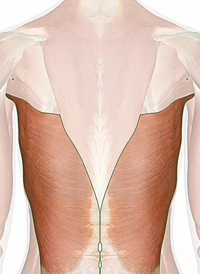 muscolo grande dorsale