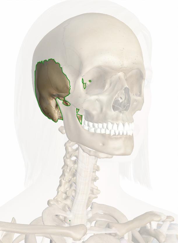 osso temporale