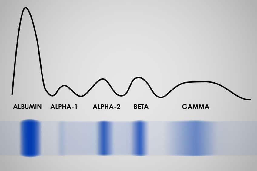 elettroforesi delle proteine: protidogramma