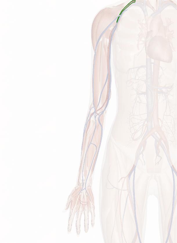 arteria ascellare