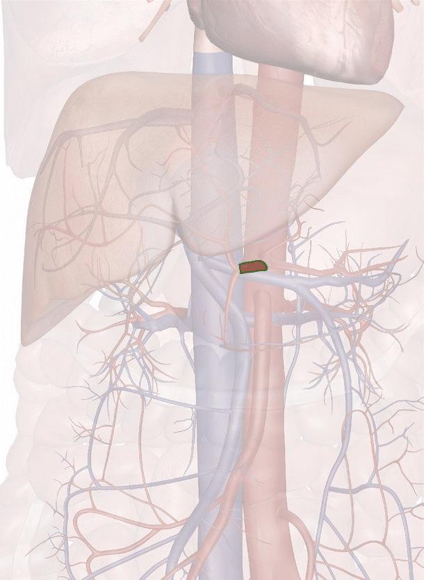 arteria epatica comune