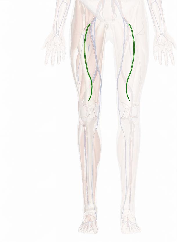 arteria femorale profonda