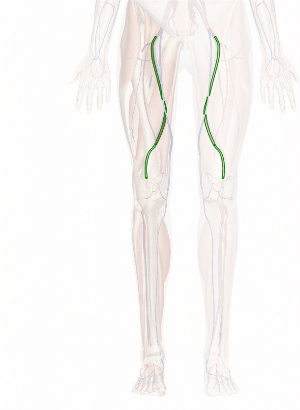 arteria femorale