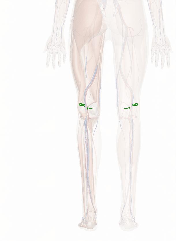 arteria genicolare superiore laterale