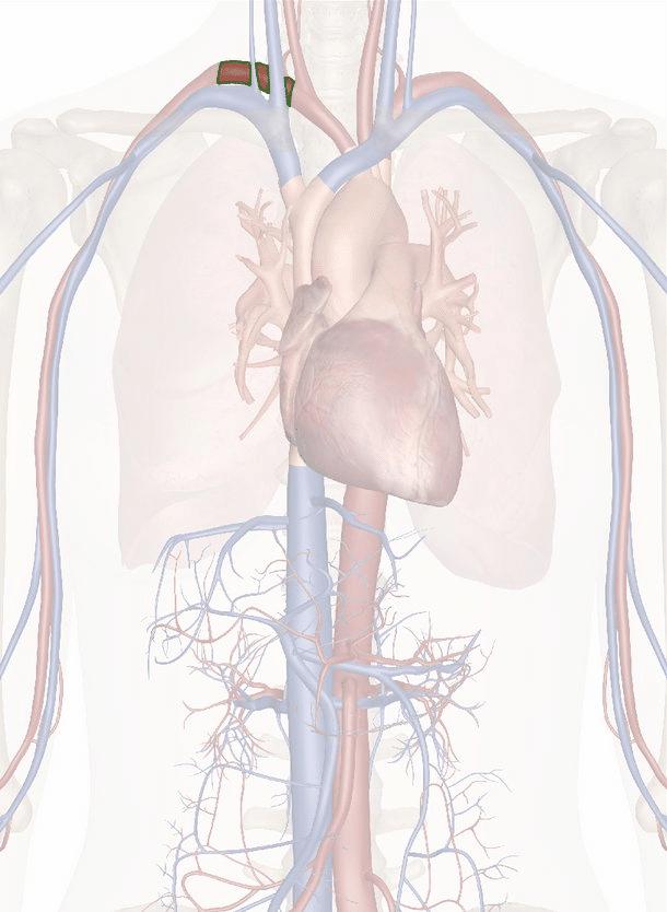 arteria succlavia destra