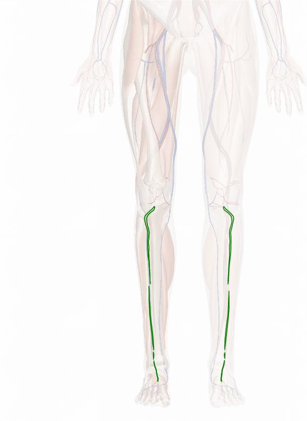 arteria tibiale anteriore