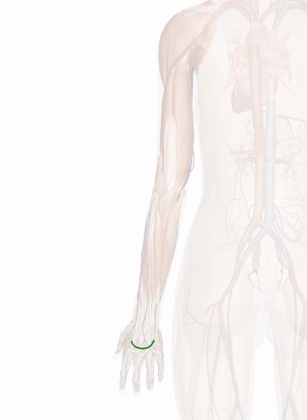 rete venosa dorsale della mano