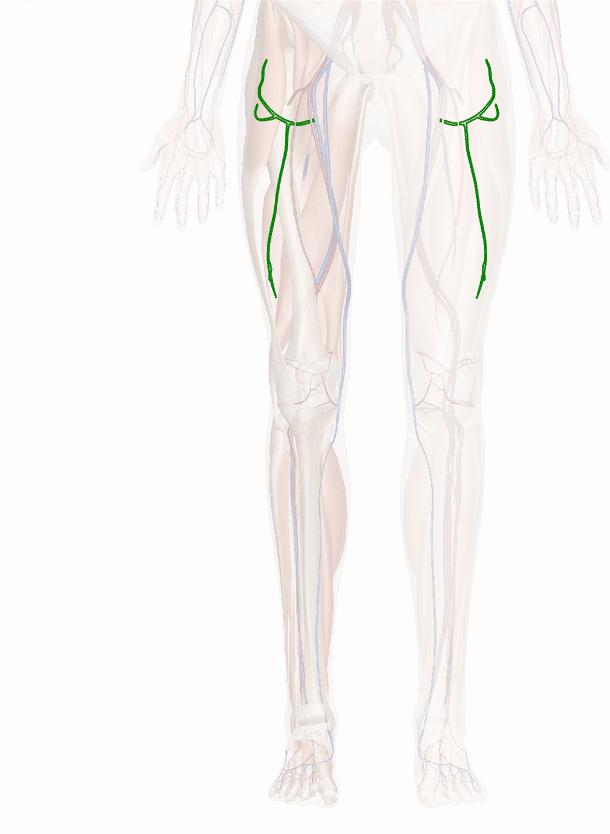 vena femorale circonflessa laterale