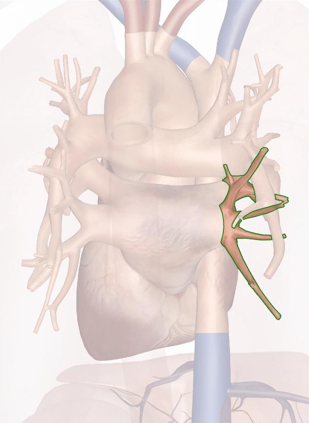 vena polmonare inferiore destra