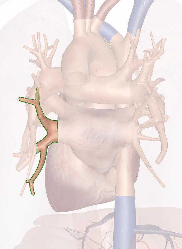 vena polmonare inferiore sinistra
