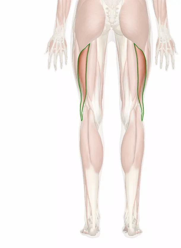 bicipite femorale capo lungo