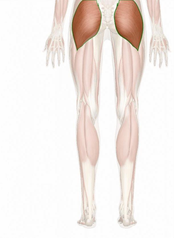 muscolo grande gluteo