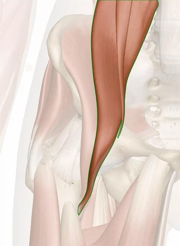 muscolo iliopsoas