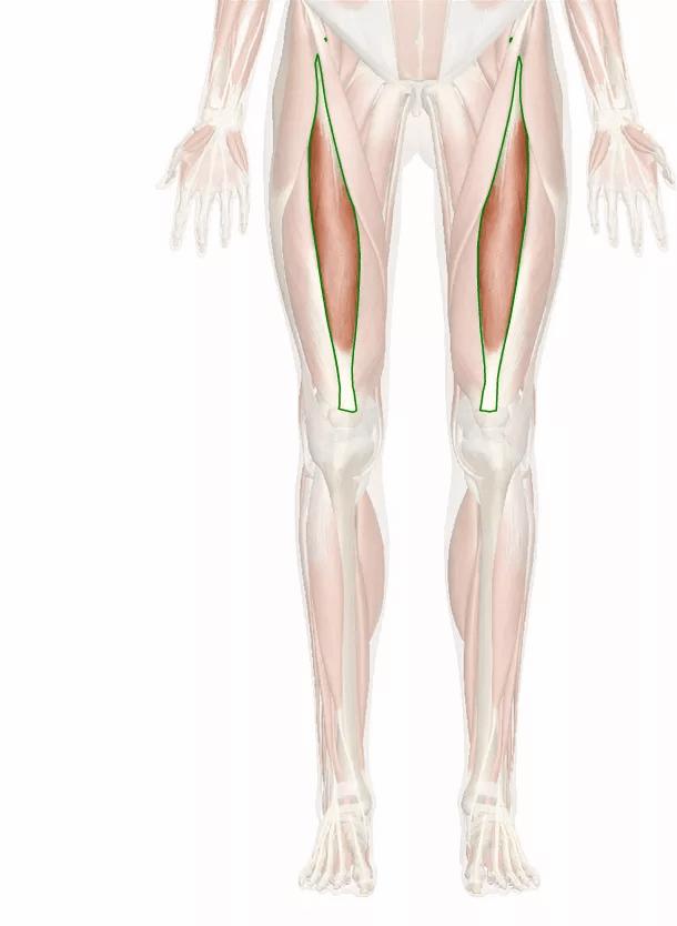 muscolo retto femorale