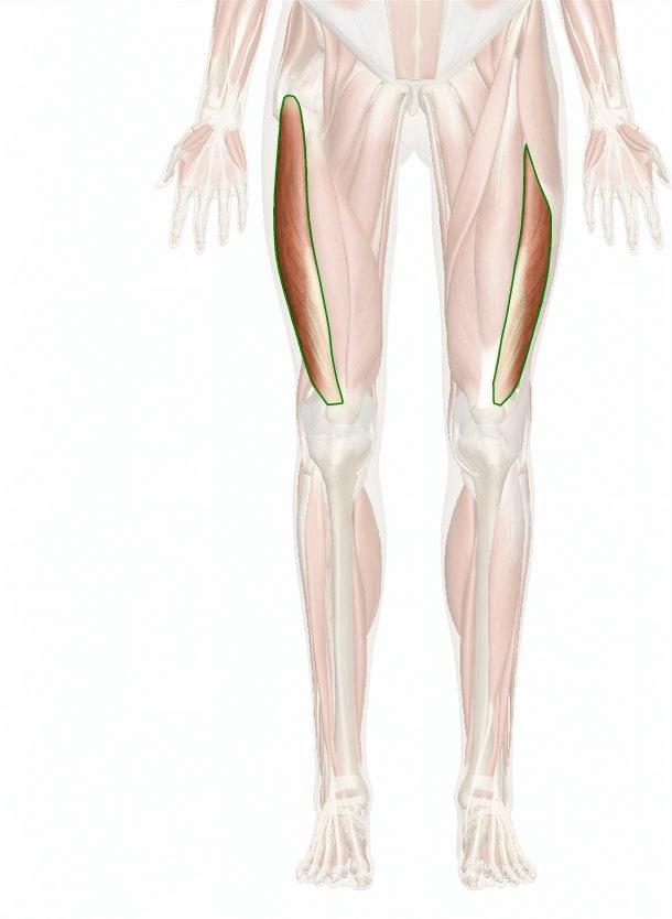 muscolo vasto laterale
