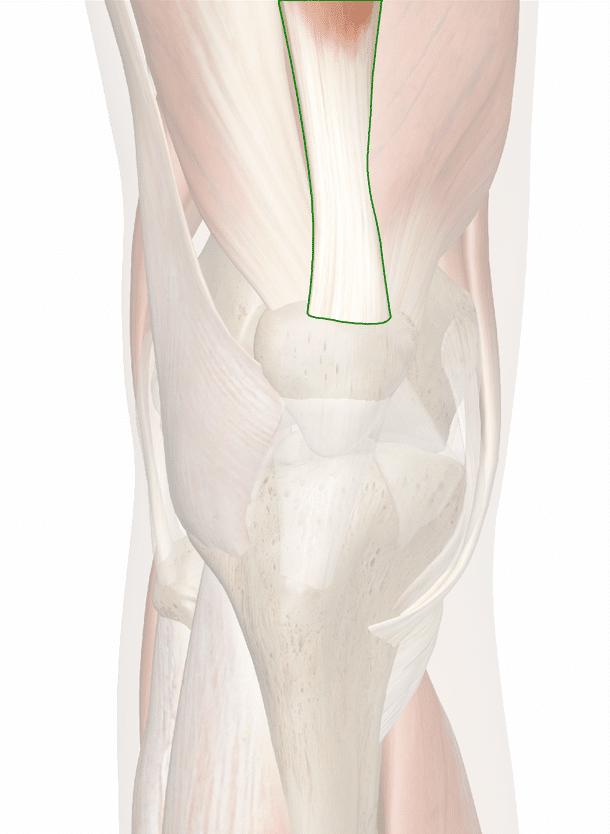 tendine del quadricipite femorale