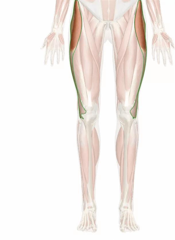tratto ileotibiale (benderella)